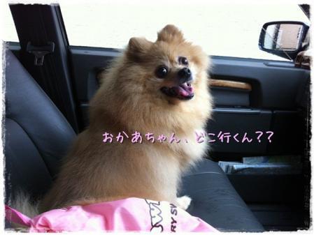 おかあちゃん、どこ行くん??