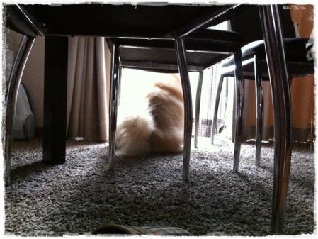 家を守るケン(犬)8792