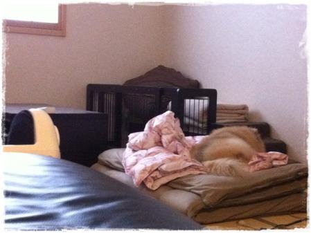 布団とサリー