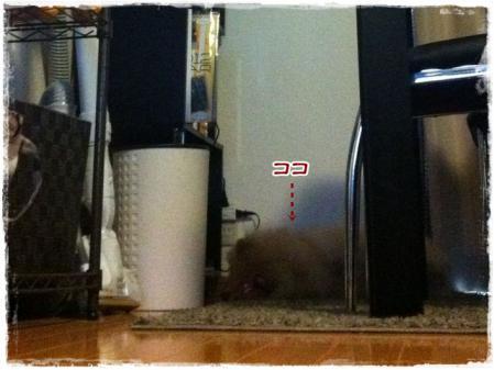 テーブルの下でねむむぅ~