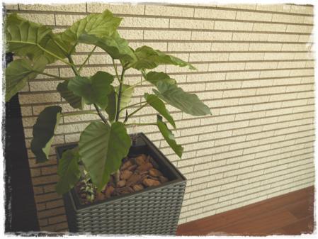 スタイリッシュな観葉植物