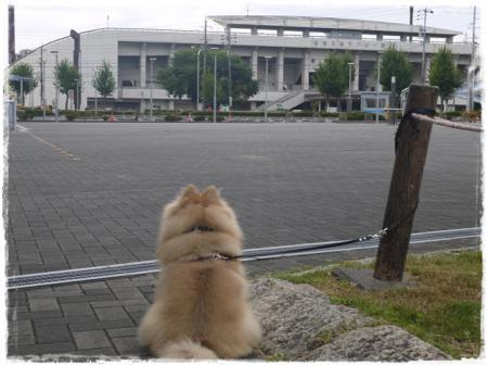 瑞穂ラグビー場とサリー