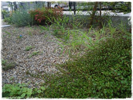 雑草がはびこる庭