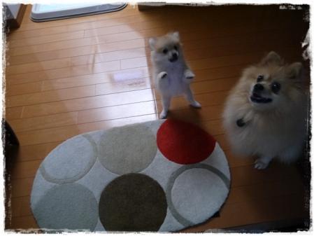 サリちゃんとカンタ-その2-