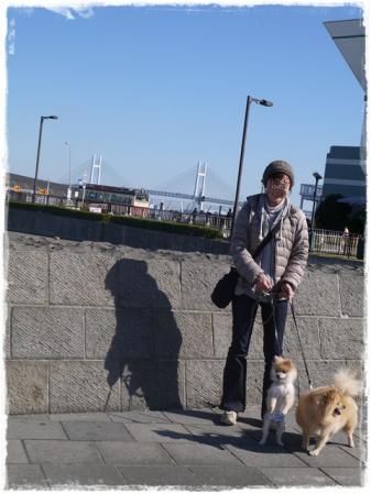 レインボーブリッジと私とサリカン