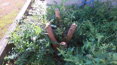 木、伐り倒し