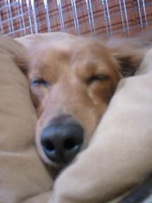 ふて寝する「しゅう」