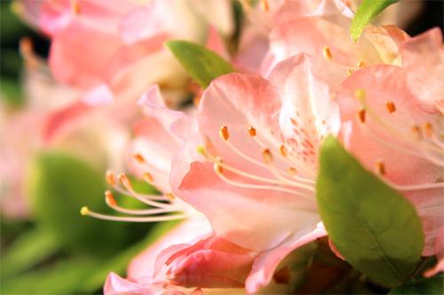 庭の花 252