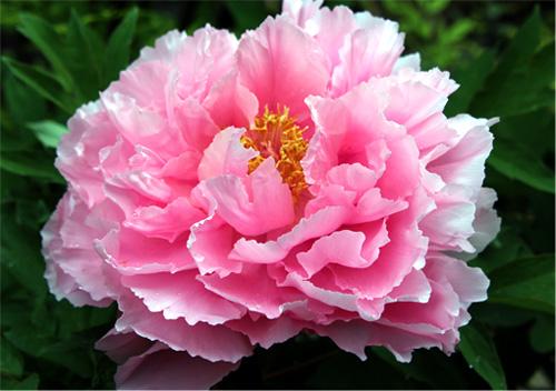庭の花 294