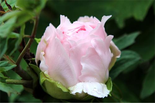 庭の花 299