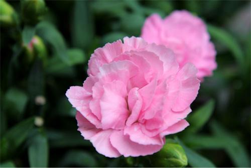 庭の花 327