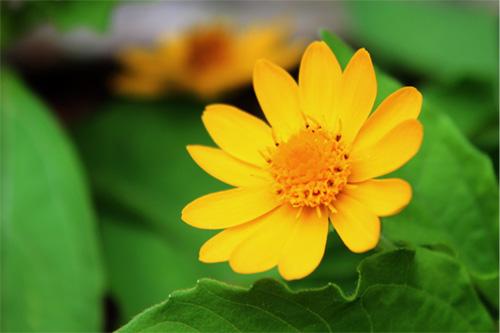 庭の花 328