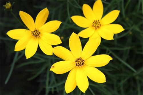 庭の花 329