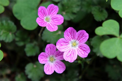 庭の花 356