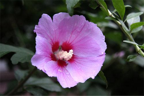 庭の花 380