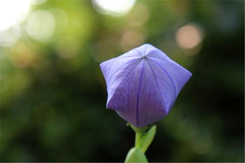 庭の花 399