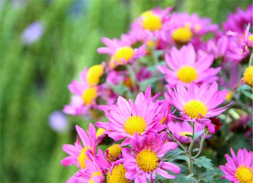 庭の花(福永) 007