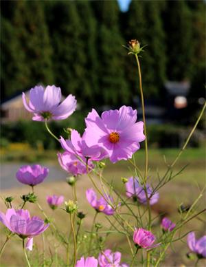 庭の花(福永) 023
