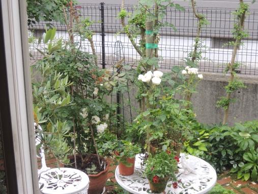 6月8日 雨の庭