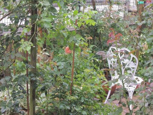 6月22日 雨の庭