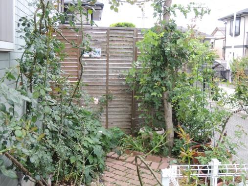 6月24日 東側の庭