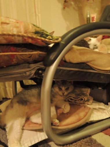 11月12日 猫トリオ