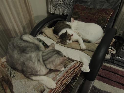 11月26日 猫トリオ
