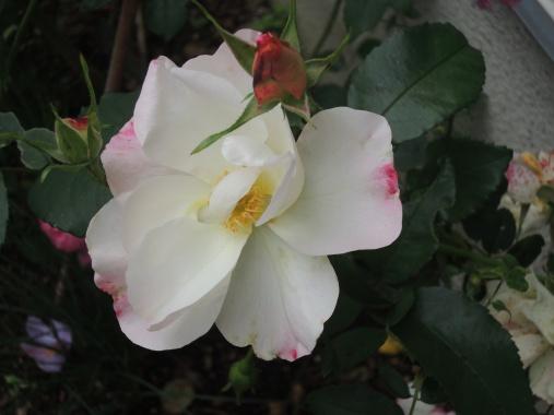 11月29日 花がすみ