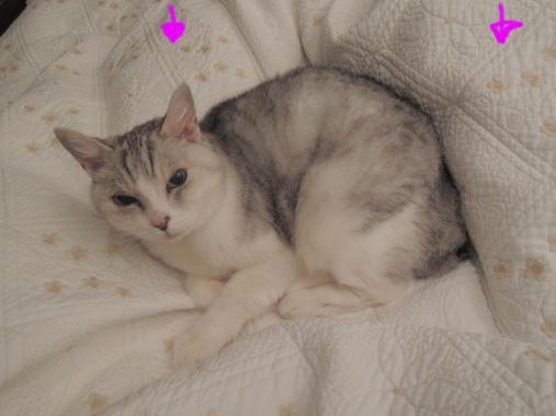 12月3日 猫トリオ