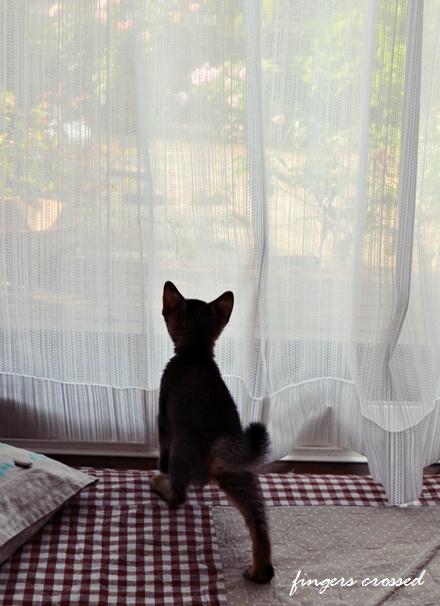 窓に近づく