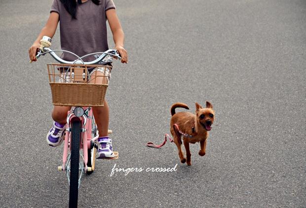 ポッキーと自転車