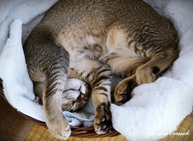丸くなって寝るラム