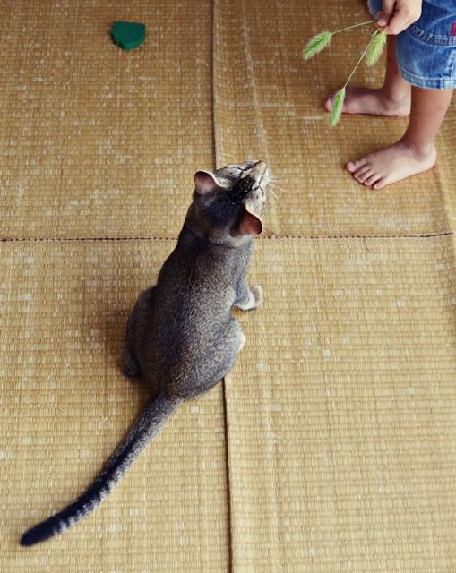 猫じゃらし5