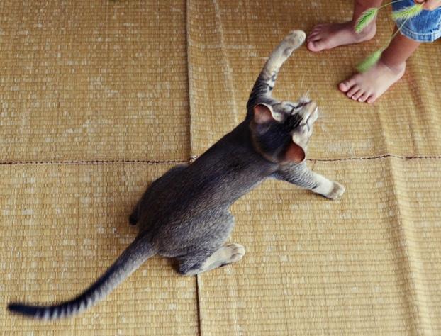 猫じゃらし6