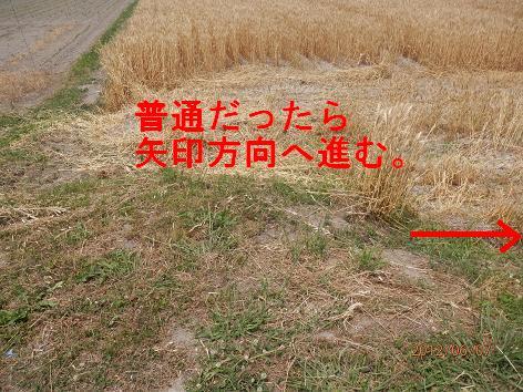 20120607_c.jpg