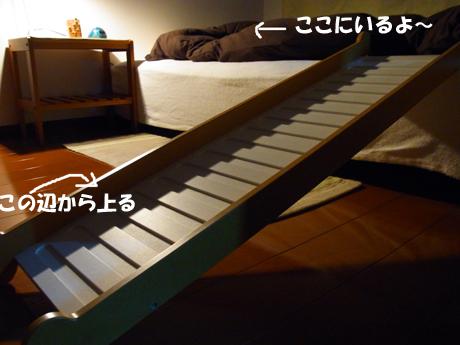 RIMG5479のコピー