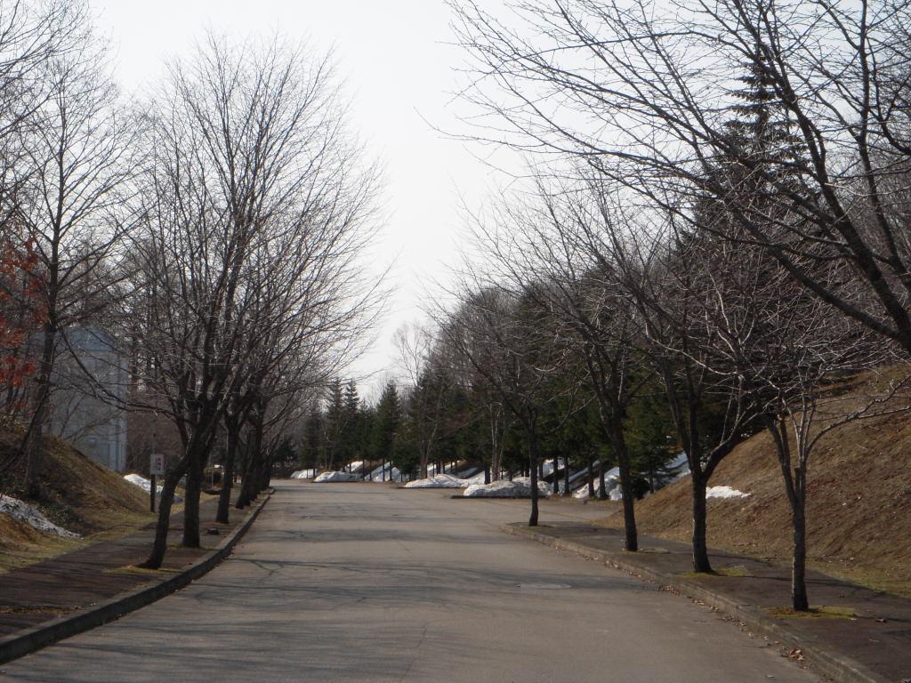 枝ばかりの桜並木