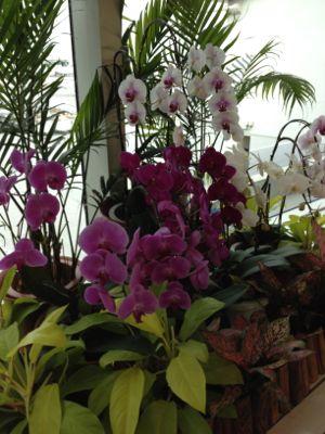 沖縄らしい花