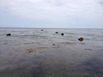 北国らしい海