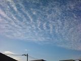 20130103pica.jpg