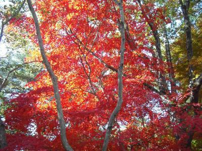植物園紅葉4