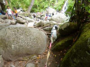 清里 吐竜の滝