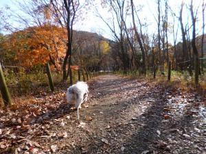 嵐山渓谷2012年12月7日