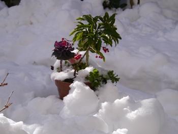 P1030386雪