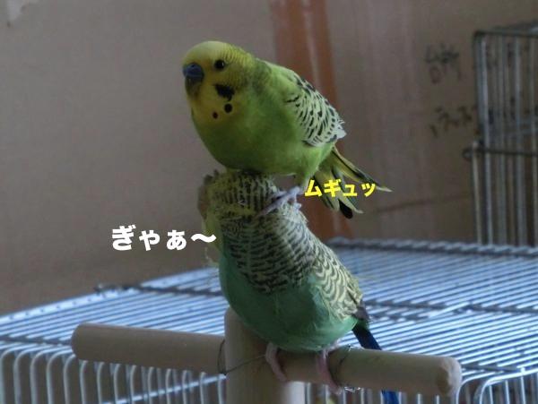 ピカちゃん2