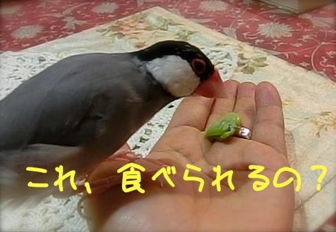 これ、食べられるの?