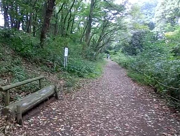 野鳥の森2