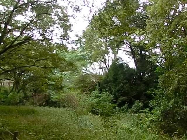 野鳥の森3