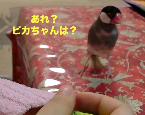 ピカちゃんどこ?