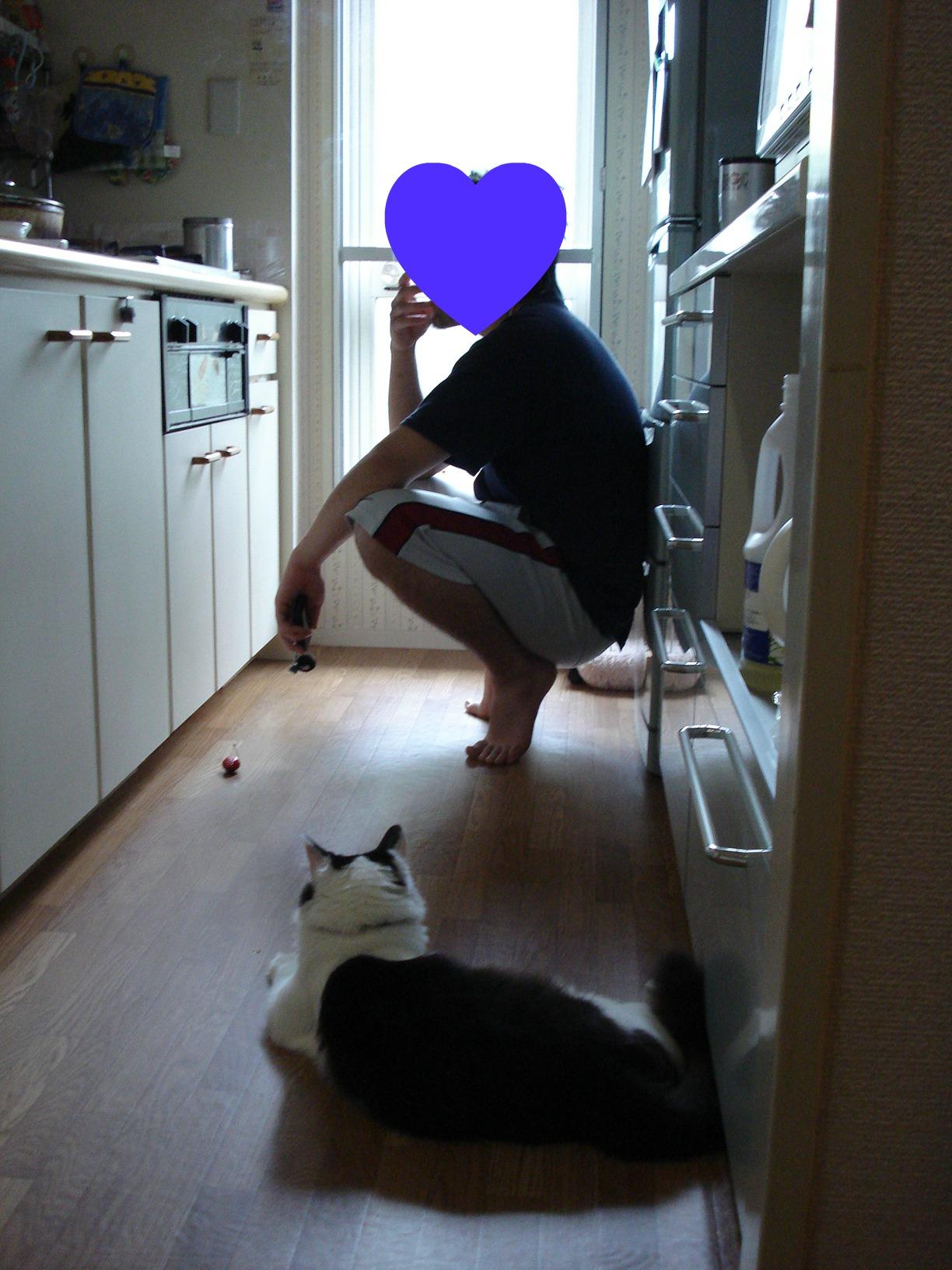 青年と猫1